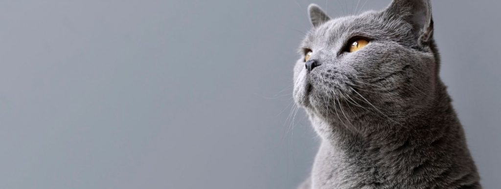 Cat Food: Guide to the Proper Nutrition of Your Feline