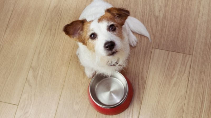 Healthy and Homemade Food for Our Animals