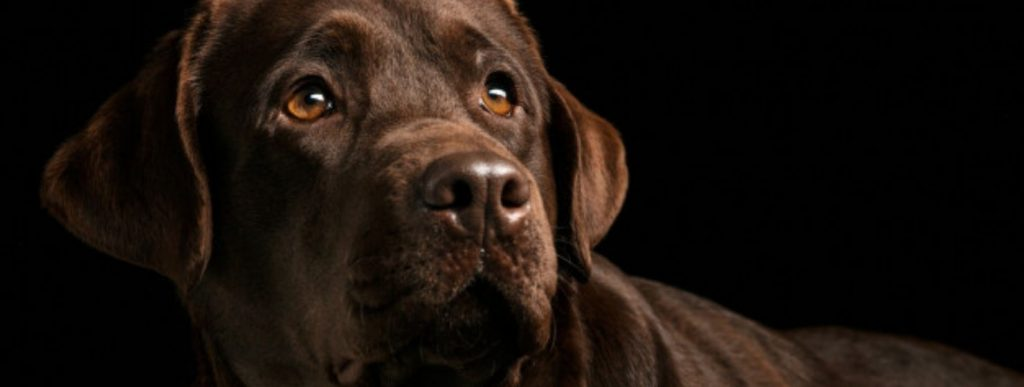 The 5 Rarest Dog Breeds in the World